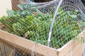 Netting on Planter Box
