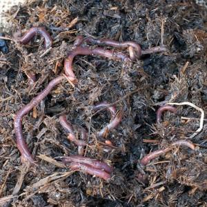 Om Nom Ally - DIY Worm Farm