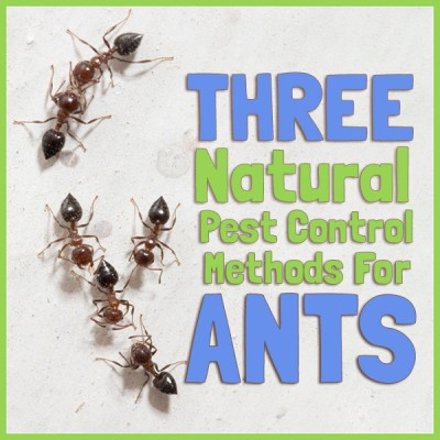Three Natural Pest Control Methods for Ants