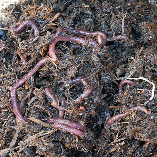 Om Nom Ally - DIY Worm Farm